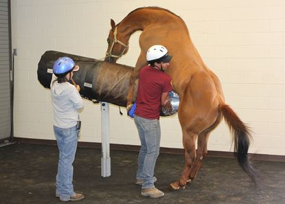 """Picture of September 20-21, 2021 - Equine Reproduction """"Boot Camp"""""""